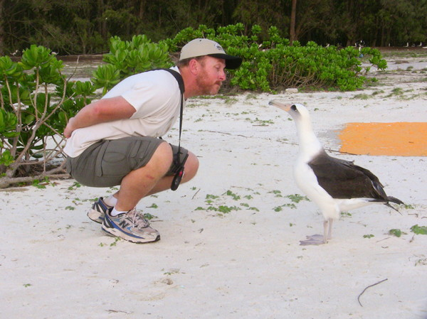 Bob Steele and Laysan Albatross, Midway Island